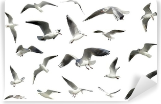 Vinylová Fototapeta Sada bílých létání izolovaných ptáků. racci