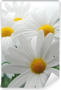 Fototapeta samoprzylepna Białe wiosna Marguerite
