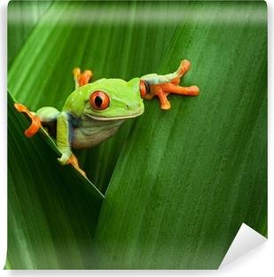 Fototapeta samoprzylepna Czerwony eyed drzewa żaba