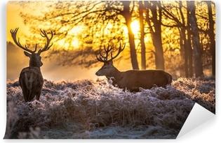 Fototapeta samoprzylepna Czerwony jeleń