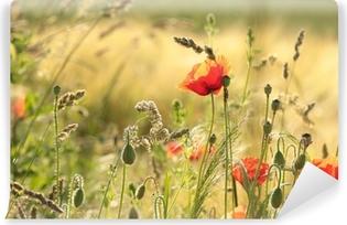 Fototapeta samoprzylepna Maku w dziedzinie rano