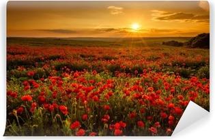 Fototapeta samoprzylepna Pole makowe o zachodzie słońca