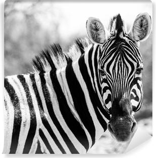 Fototapeta samoprzylepna Portret zebra w czerni i bieli