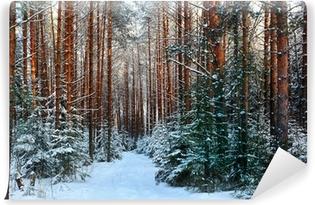 Fototapeta samoprzylepna Sosnowy las, zima, śnieg