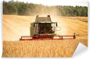 Fototapeta samoprzylepna Zbiory zbóż