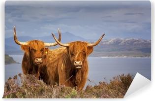 Vinylová Fototapeta Skotský kráva IV