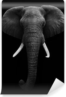 Fototapeta winylowa Słoń afrykański samodzielnie
