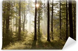 Vinylová Fototapeta Sluneční paprsky vstupující do lesa na mlhavé ráno