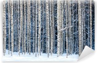Fototapeta winylowa Snowy brzozy