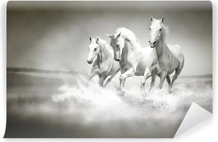 Fototapeta winylowa Stado białych koni biegnących przez wody