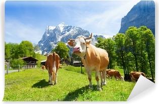 Vinylová Fototapeta Stádo krav
