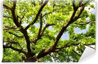 Vinylová Fototapeta Staré dubové větve