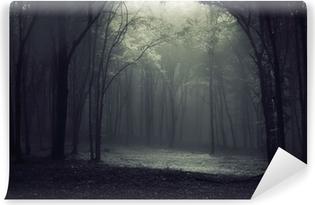Vinylová Fototapeta Světlo v lese