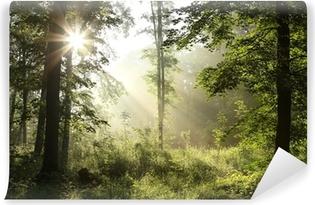 Fototapeta winylowa Świeże lasy liściaste wiosną na mglisty poranek