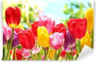 Fototapeta winylowa Świeże tulipany w ciepłe światło słoneczne