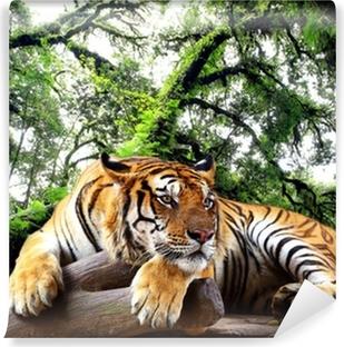 Fototapeta winylowa Tygrys szuka coś na skale w tropikalnych lasów zimozielonych