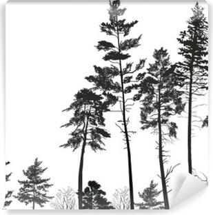 Vinylová Fototapeta Vysoká borovice lesní černé siluety na bílém