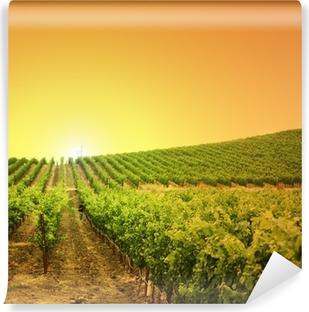 Fototapeta winylowa Winnica na wzgórzu
