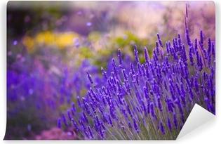 Vinylová Fototapeta Zahradní květiny Lavendar barevné pozadí