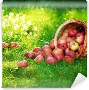 Vinylová Fototapeta Zdravé biojablek v koši