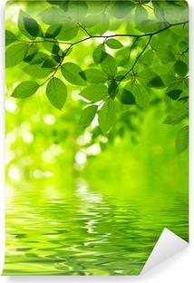 Fototapeta winylowa Zielone liście