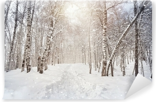 Fototapeta winylowa Zima birchwood