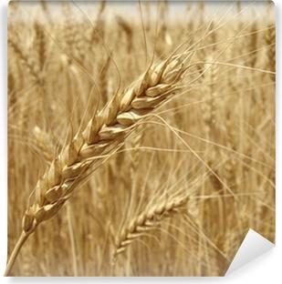 Fototapeta winylowa Złoty Kłos pszenicy