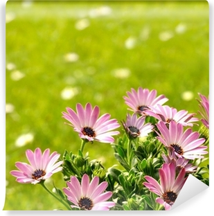 Fototapeta zmywalna Background łąki Daisies
