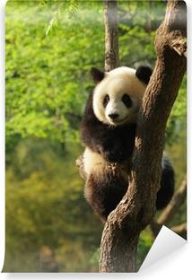 Fototapeta zmywalna Cute panda cub