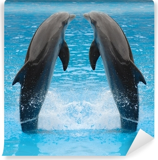 Fototapeta zmywalna Delfin bliźniaki