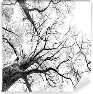 Fototapeta zmywalna Drzew