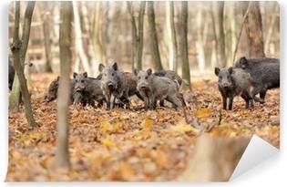 Fototapeta zmywalna Dzik w jesiennym lesie