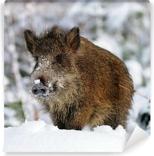 Fototapeta zmywalna Dzika, zima