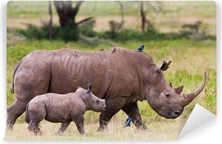 Fototapeta zmywalna Rhinoceros z dzieckiem, Lake Nakuru, Kenia