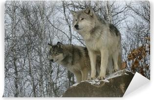 Fototapeta zmywalna Wilk, Canis lupus