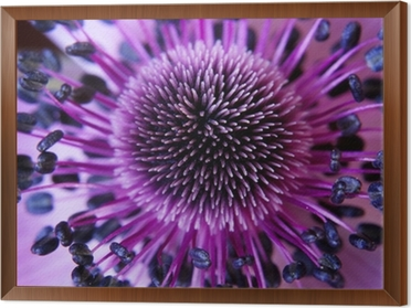 anamone flower Framed Canvas