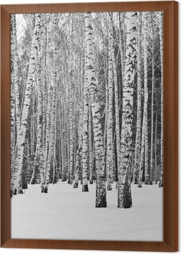 Birch forest in winter in black and white Framed Canvas
