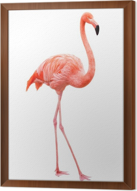Bird flamingo walking on a white background Framed Canvas • Pixers ...