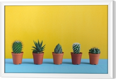 Cactus on the desk with yellow wal Framed Canvas