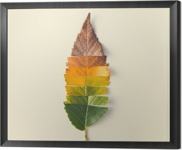 Creative layout of colorful autumn leaves. Framed Canvas