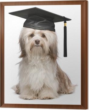 Cool Graduation Cap Black Adorable Dog - framed-canvas-prints-cute-eminent-graduation-havanese-dog-wit-black-cap  HD_304998  .jpg?H4sIAAAAAAAAA3WOTW7DIBBGr4MlyPBjIPgA2eYIFgacurUNAlJHOX2xKnVXzWJmnvTNPHjuxc4BXNhryLAt3q8B5mVtWxlyKMs7oJ5rTLuh0RVR2qb4HbLLMSHCGMdECiz7K1ZUd8NhW3Kz-Qt91JrKAFDEJS2vdq41V8BtBThlChgFqefAlZ-MUEqNccr2TdIa6x5JtpslPoeDnDQelnBNTP8Skkh1SfsD07O6P0dKcX-61bxsqMnGZlHRZ3p08I_J7wwtBbc7SA7aADdg-InG211ybbgxfPRcz1RqT9mkmPezcFpYwbST-sTXS_vyA3thiM5JAQAA