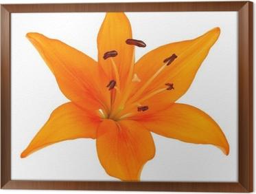 Fleur De Lys Orange Wall Mural Pixers We Live To Change