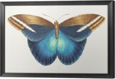 Illustration of animal artwork Framed Canvas