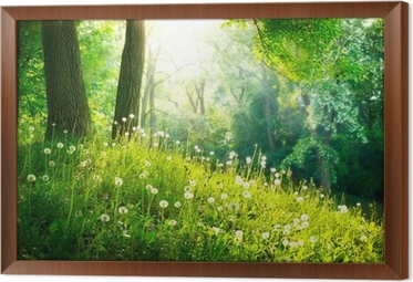 Spring Nature. Beautiful Landscape. Green Grass and Trees Framed Canvas