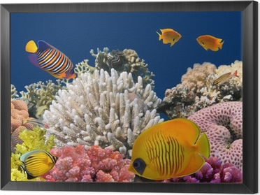Underwater life of a hard-coral reef, Red Sea, Egypt Framed Canvas