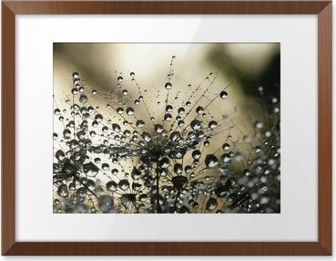 Wet dandelion seed Framed Poster HD