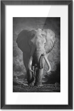 Elephant Bull (Artistic processing) Framed Picture