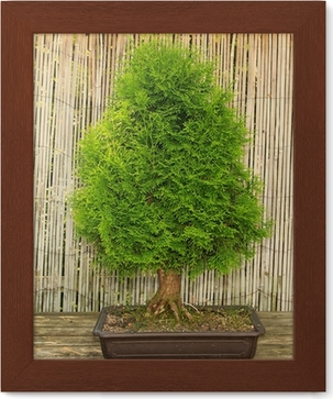 bonsai baum garten, japanischer garten bonsai baum wall mural • pixers® • we live to change, Design ideen