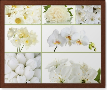 Collage Of Different White Flowers Sticker Pixers We Live To Change