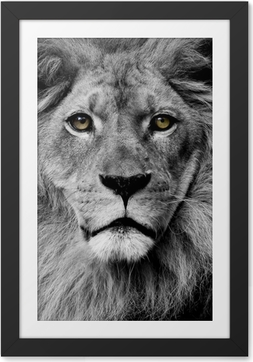 Lion eyes Framed Poster